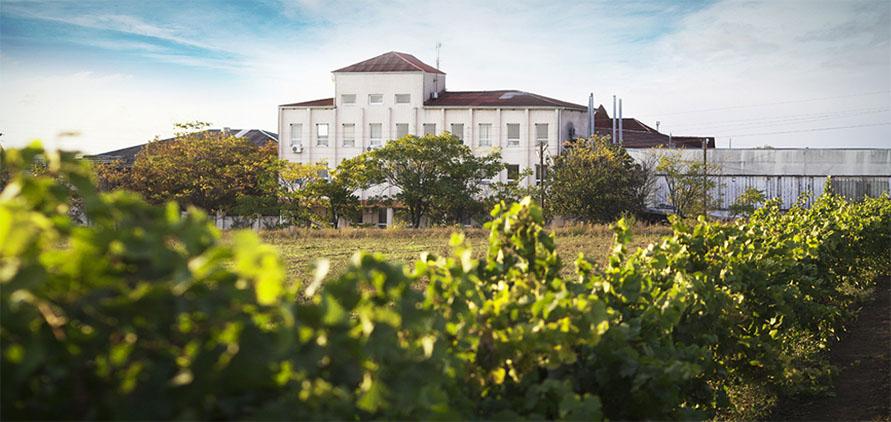Koblevo Winery